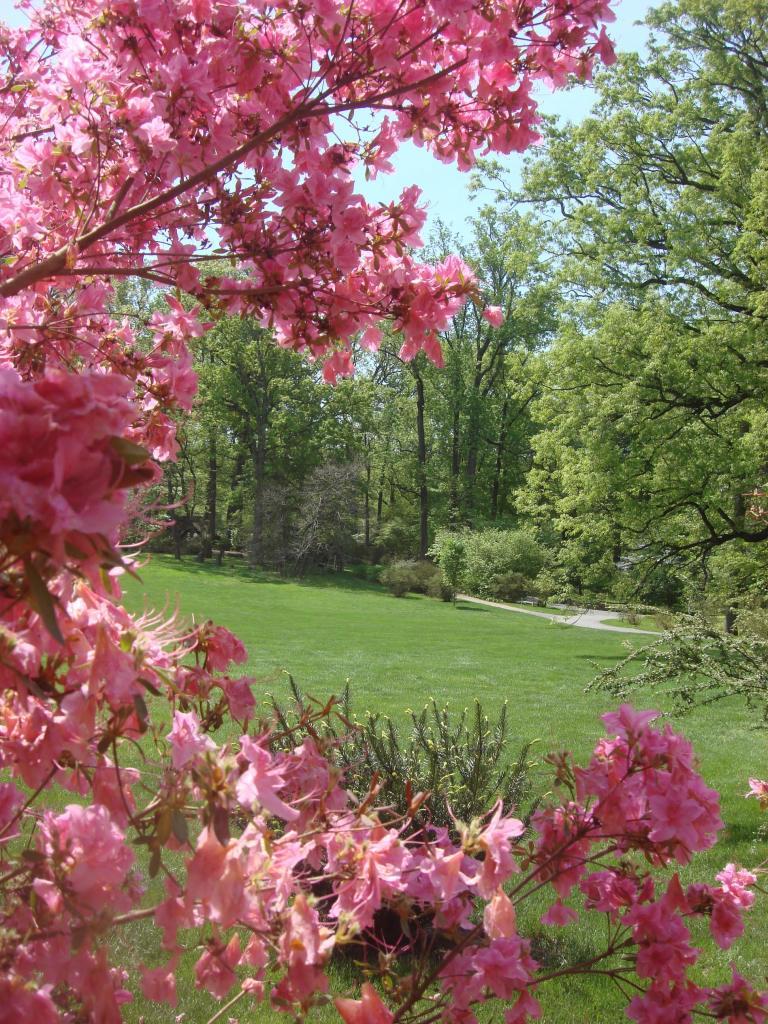 Winterthur's azaleas May 2013-10