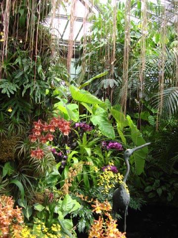 longwood-orchids-51