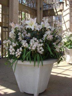 longwood-orchids