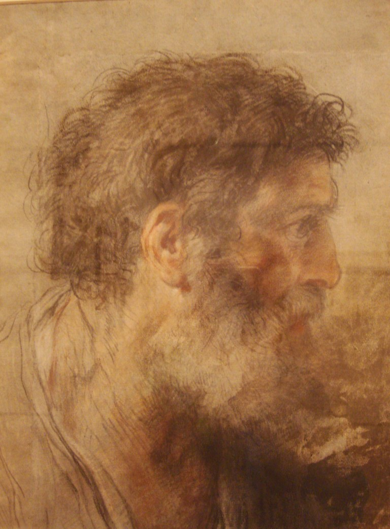 Head of a Bearded Man, 1715, Benedetto Lutti, PMA-1