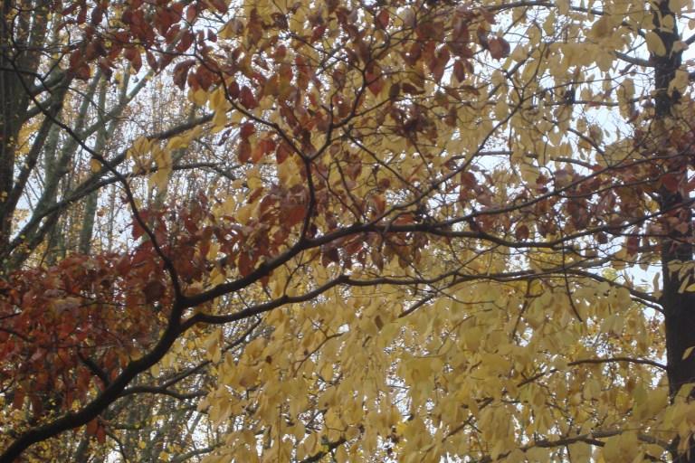 Autumn 2015-03
