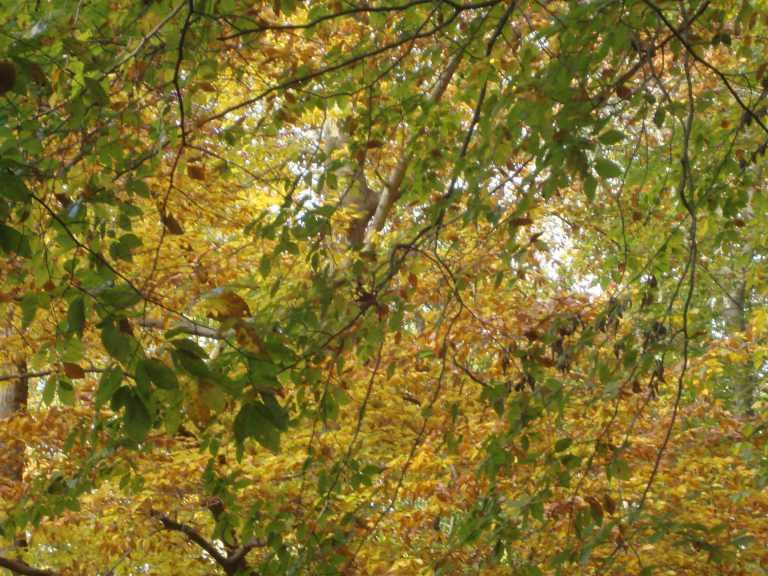 Winterthur Autumn 2013-21