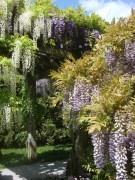 Wisteria Arbor, Longwood Gardens, 2011-01