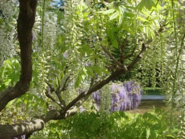 Wisteria Arbor, Longwood Gardens, 2011-12