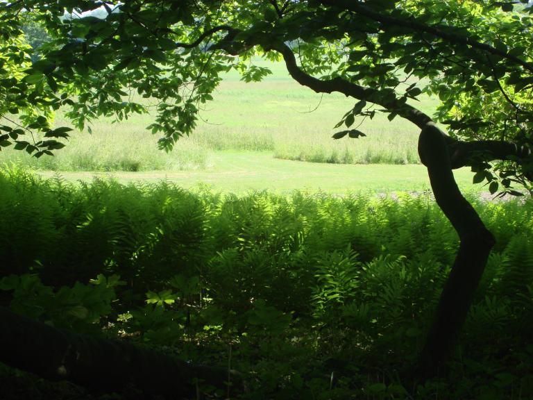 Ferns, early summer, Winterthur, DE-07