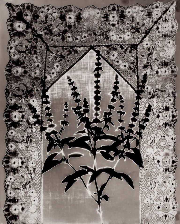 Specimen-16-1979