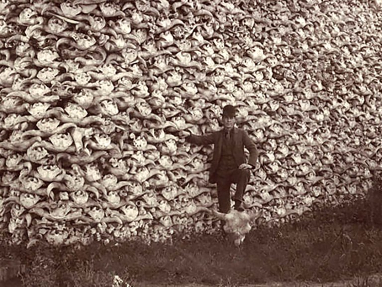 mountain-of-american-bison-skulls-2