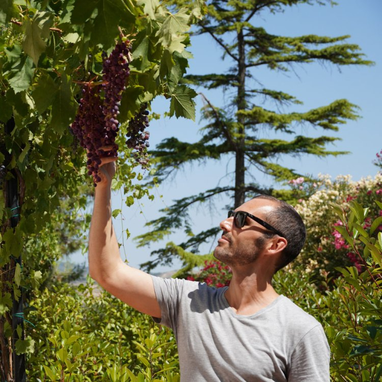 Scott from Vine & Soul looking at grapes