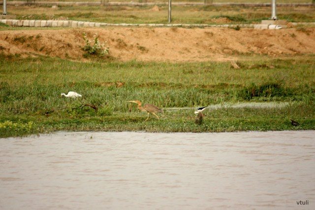 Bakarpur Pond - Bird Photography