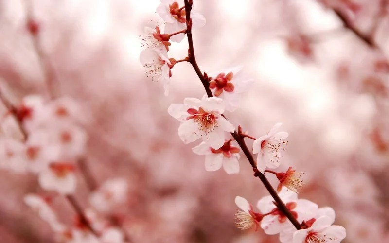 Photos-of-Sakura-vinegret (15)