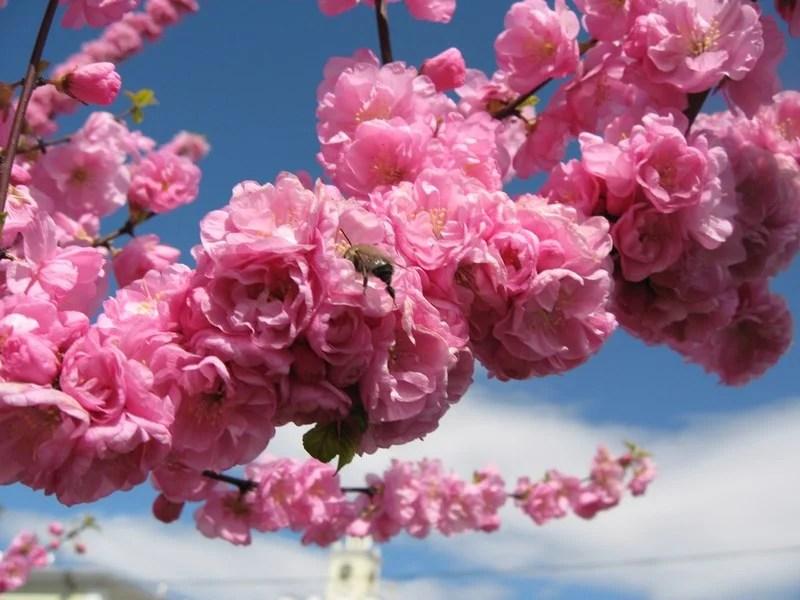 Photos-of-Sakura-vinegret (22)