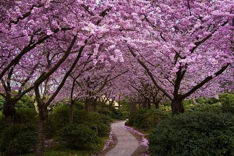 Photos-of-Sakura-vinegret (29)