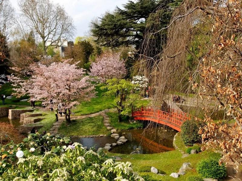 Photos-of-Sakura-vinegret (8)