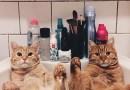 Этих двух рыжих котов нашли в парке и теперь они лучшие друзья.