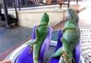 Видео: Ящерицы решили красиво отдохнуть на диванах.