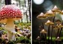 Великолепные фотографии грибов Филипа Еремита.