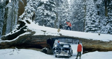 Редкие фотографии из коллекции National Geographic