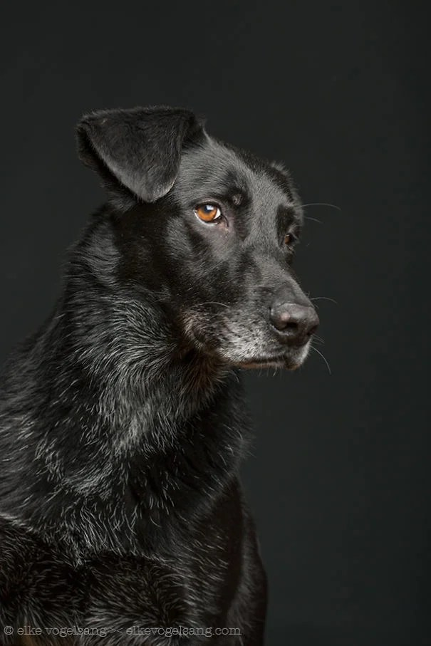 dogs-questioning-the-photographers-sanity_vinegret (2)