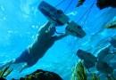 Видео: «Полет под водой».