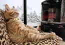 Подборка фотографий: Кошки, которые жить не могут без тепла.