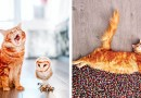 Знакомьтесь — это Котлета! Не просто рыжий кот, а кот-модель.