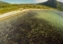 Видео: Миграция лосося с высоты птичьего полета.