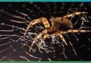 Видео: Как паук плетет свою паутину.