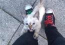 Настойчивый котенок нашел себе хозяина.