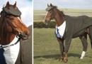 Для лошади сшили на заказ костюм-тройку…