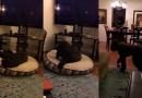 Видео: Собака знает, что когда тухнет телевизор — это сигнал ко сну.