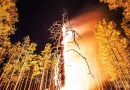 Видео: Дерево в огне на фоне звездного неба.