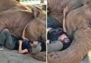 Видео: Огромную слониху укладывают спать под пение колыбельной.
