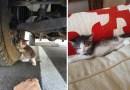 Парень увидел под грузовиком испуганного котенка и не смог пройти мимо.