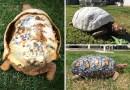 Этой черепахе создали на 3D-принтере первый в мире панцирь.