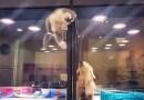 Видео: В зоомагазине маленький котенок перелез через оградку к своему дружку щенку.