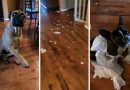 Видео: Пес «сдал» своего лучшего друга.