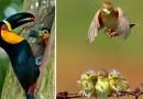Эти 25 фотографий показывают, как птицы заботятся о своем потомстве.