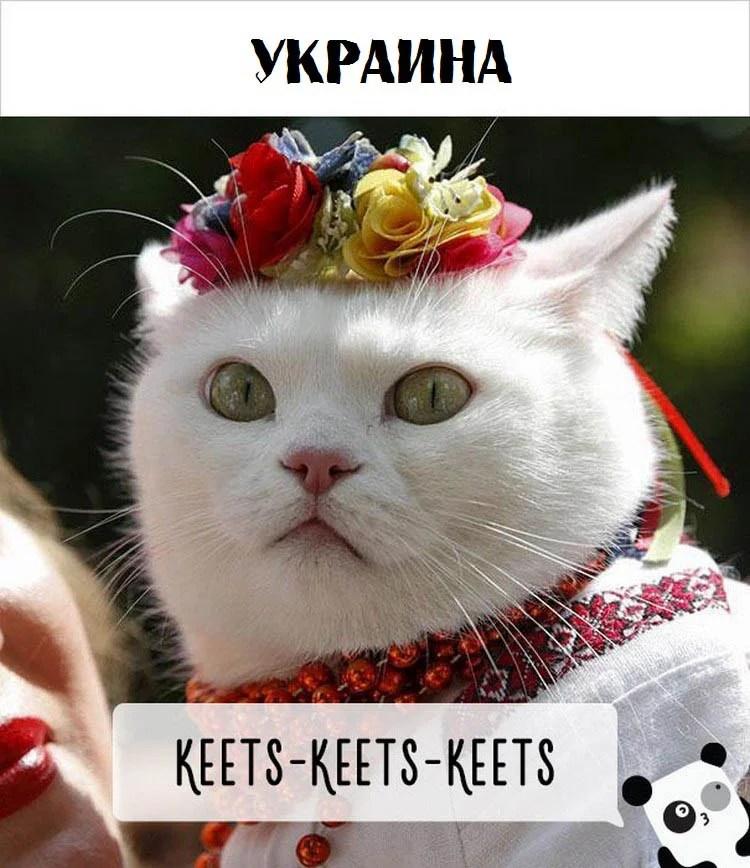 cat-calling-in-different-languages-vinegret (3)