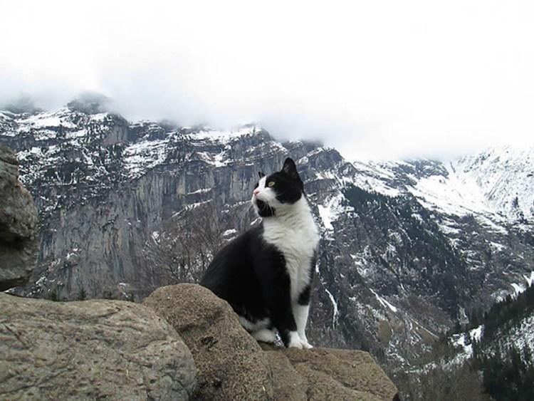 cat-guide-man-mountain-gimmelwald-switzerland-vinegret (2)