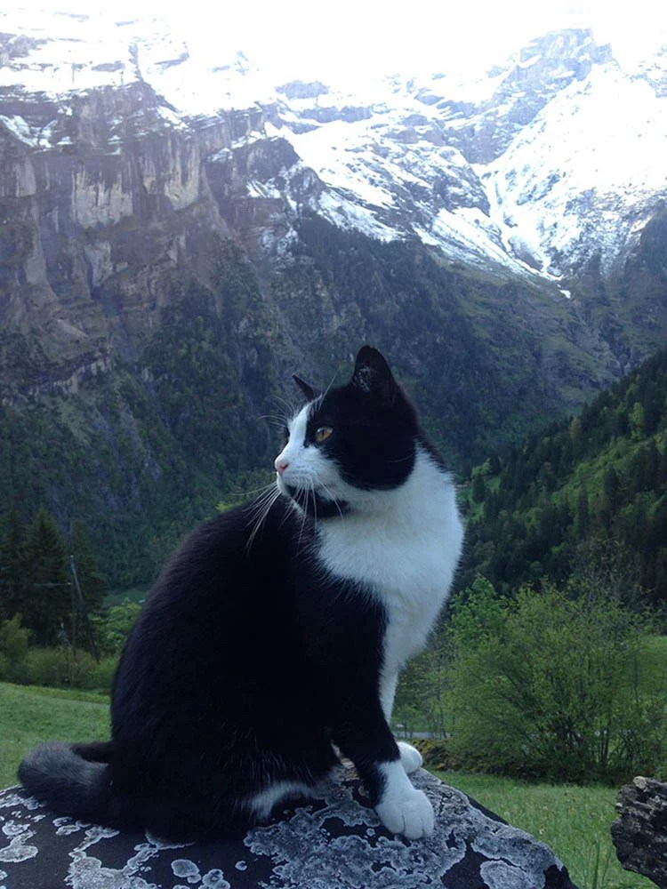 cat-guide-man-mountain-gimmelwald-switzerland-vinegret (4)