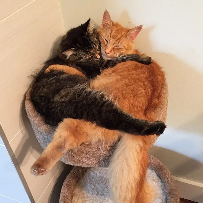 cats-sleeping-together-before-after-growing-up-renley-lili-vinegret (7)
