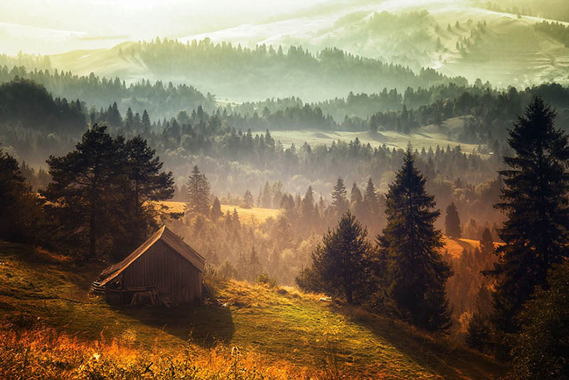 cozy-cabins-in-the-woods-vinegret (12)