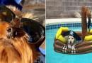 Владельцы собак делятся фотографиями своих питомцев, которые великолепно проводят это лето.
