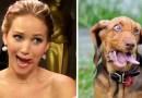 Проект «YouAreDogNow» размещает у себя на twitter-аккаунте людей и собак, которые имеют какие-то схожие внешние признаки.