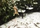 Видео: Кошка радостно пытается поймать снежинки.