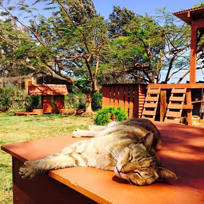lanai-cat-sanctuary-hawaii-vinegret (7)