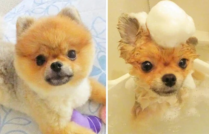 wet-dogs-before-after-bath-vinegret (4)