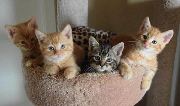 8000-dollars-anonymous-donation-animal-shelter-vinegret-4