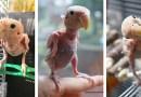 Интернет безоговорочно влюбился в этого попугая без перьев и с разных концов планеты высылает ей свитерочки.