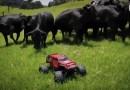 Видео: Коровы — ну очень любопытные существа.